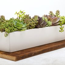 "24"" Concrete Planter"